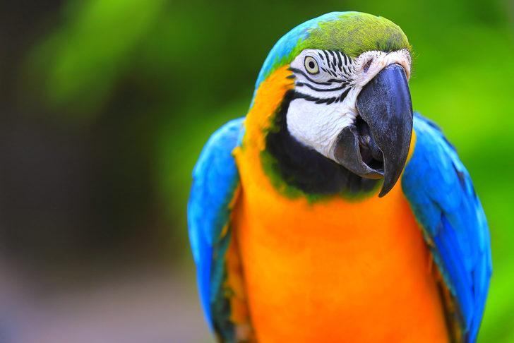 Polis iş birlikçi papağanı 'gözaltına' aldı