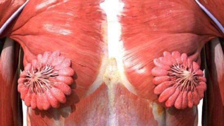 Twitter'da viral olan kadın anatomisi görseli
