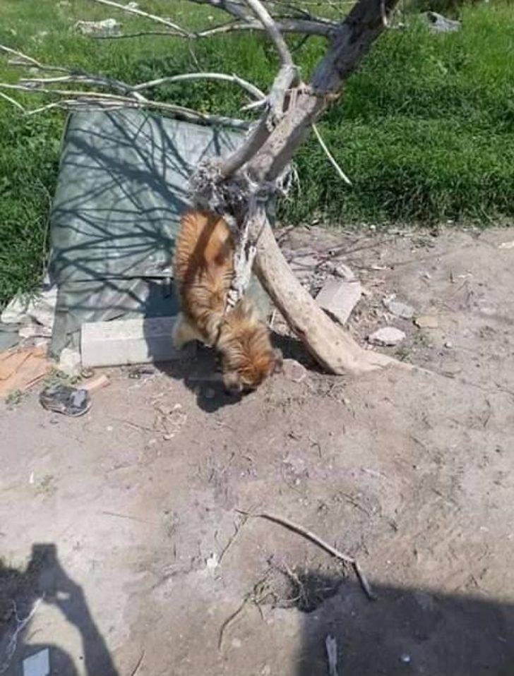 Köpek, iple ağaca asılarak öldürüldü