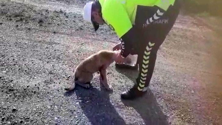 Kafasına geçirilen bidonla dolaşan köpeği polis kurtardı