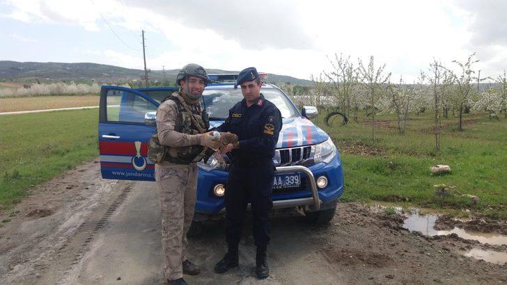 Jandarmanın yaralı bulduğu şahine tedavi