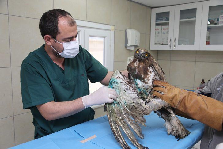 Ümraniye'de yaralı kartal tedavi altına alındı