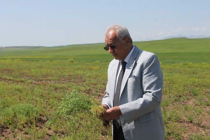 Garzan Ovası'ndaki tarım alanları yağışlardan zarar gördü