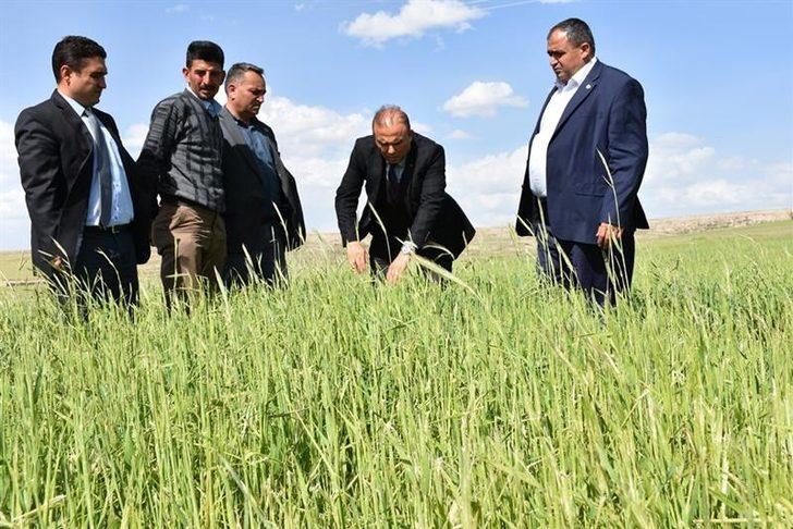 Aksaray'da tarım arazilerinde zarar tespiti yapıldı