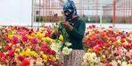 Antalya'da Anneler Günü çiçeklerinin tanesi 35-40 kuruş