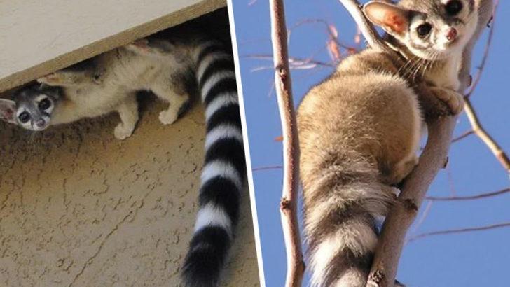 İnanılır gibi değil ama bu bir kedi!
