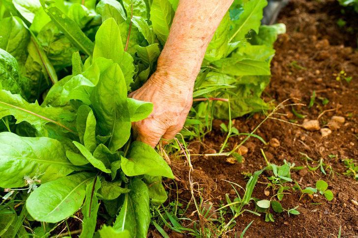 """Gastroenteroloji Uzmanı Prof. Dr. Güliter: """"Sıcak havalarda gıdaların temizliğine dikkat edin"""""""