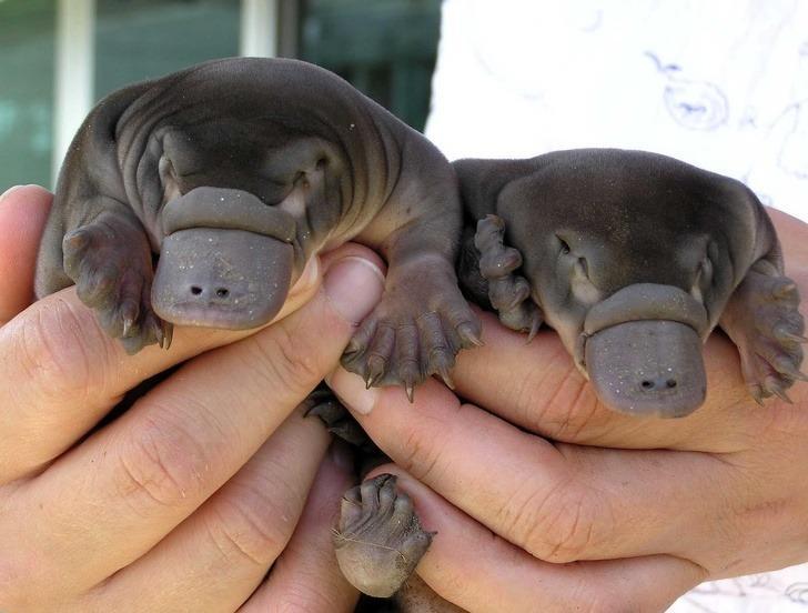 Daha önce hiç böyle görmediniz! Hayvanların yavru halleri görenlerin kalbini ısıtıyor