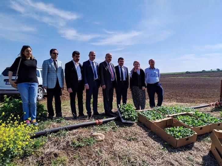 Bursa'da ilk kez Karacabey'de yetiştirilecek