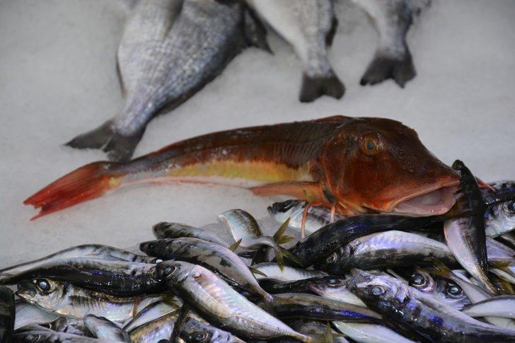 Kırlangıç balığı 25 liradan satışa sunuluyor