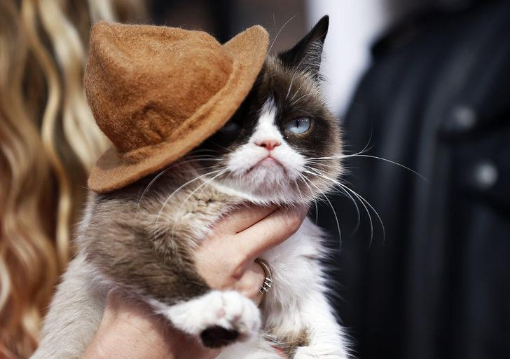 'Huysuz Kedi' hayatını kaybetti