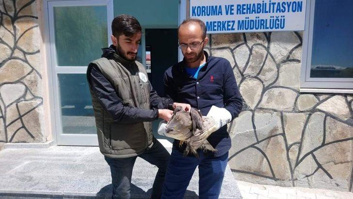 Yaralı Arı Şahin tedavi altına alındı
