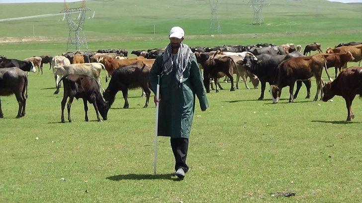 KPSS'yi kazanamayınca çobanlık yapmaya başladı