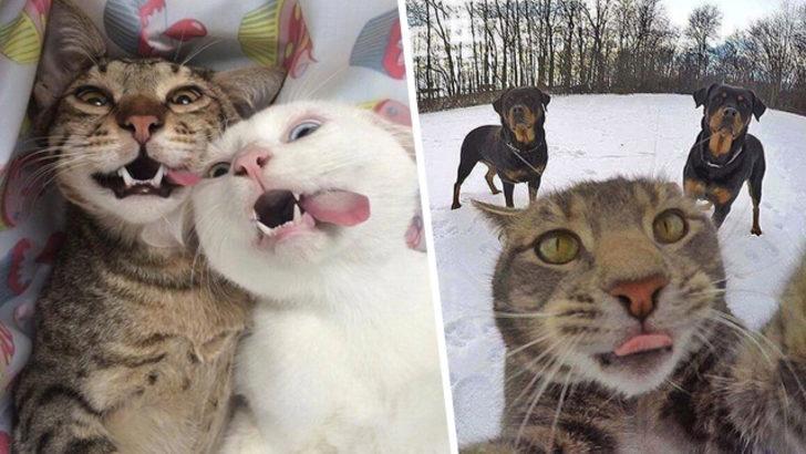 Bizlerden daha iyi selfie çeken sevimli kediler!