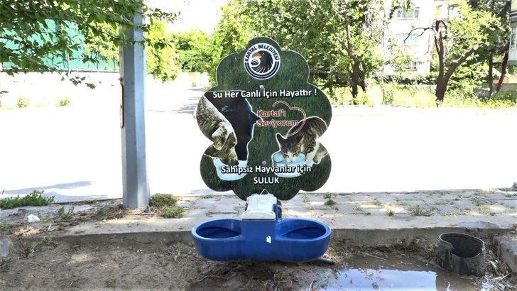 Kartal Belediyesi sokak hayvanlarını unutmadı