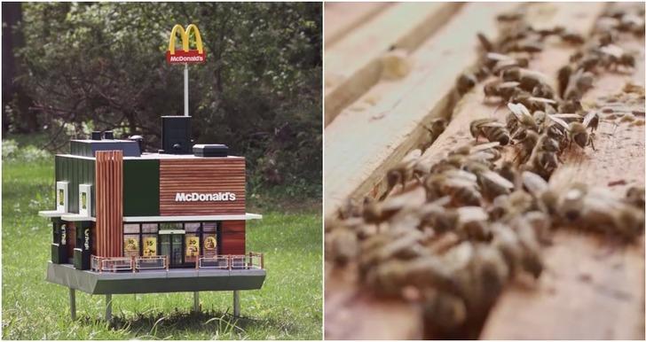 Dünyanın en küçük McDonalds şubesi açıldı ama insanlar için değil!