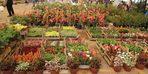 Karşıyaka, Çiçek Festivali ile renklendi