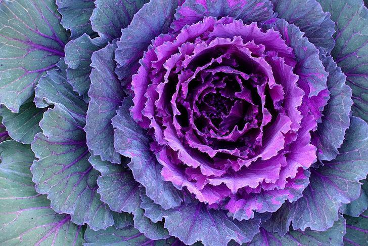 Kırmızı-mor renkli sebze ve meyveler sağlık deposu