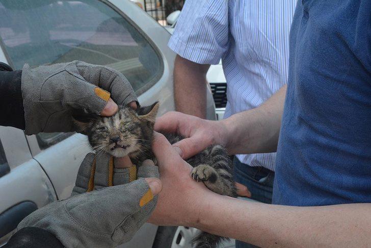Otomobile giren yavru kediyi itfaiye kurtardı