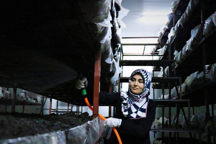 Devlet desteğiyle kurdukları tesiste mantar üretiyorlar