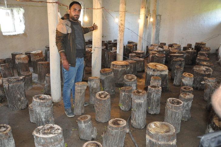Genç girişimci kütükte mantar yetiştiriyor