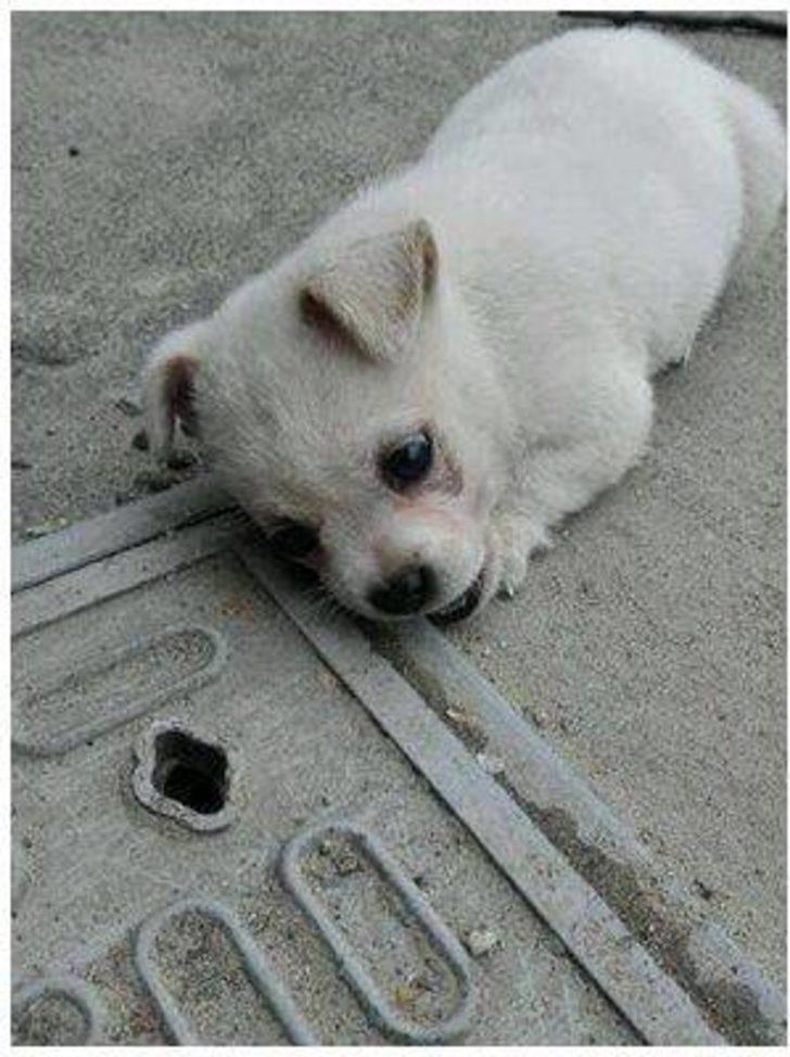 Günlerce rögar kapağından ayrılmayan yavru köpeği o fark etti. Hikayesi ise yürekleri dağladı.