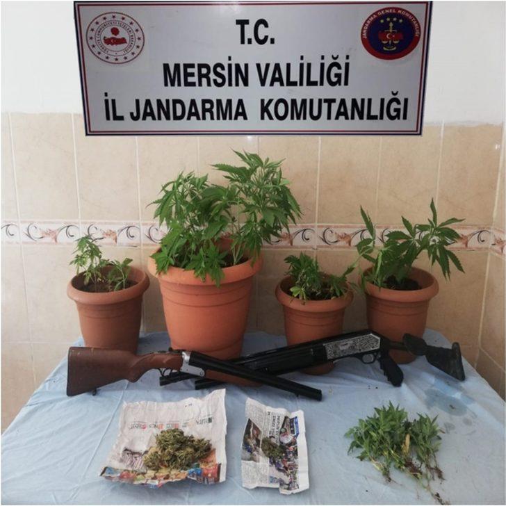 Mersin'de 292 kök kenevir bitkisi ele geçirildi