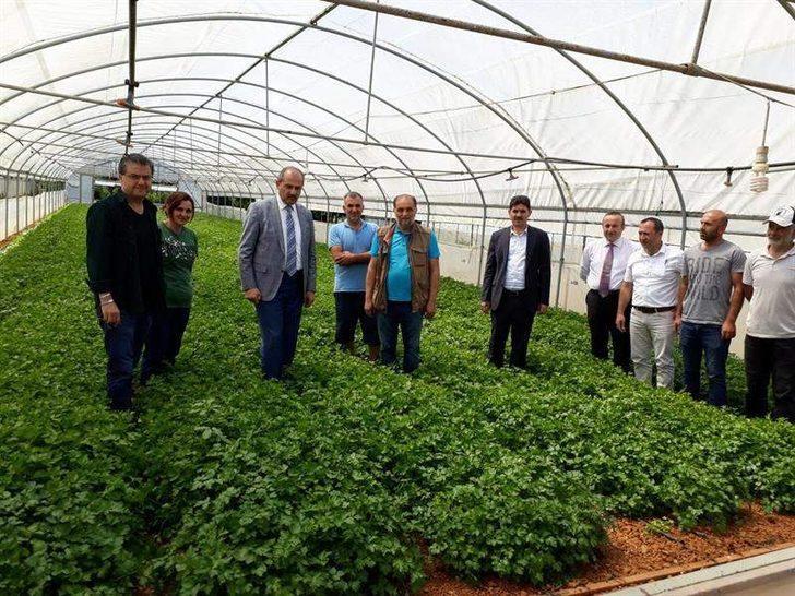Trabzon'da örtüaltı üretimin kalbi Akyazı
