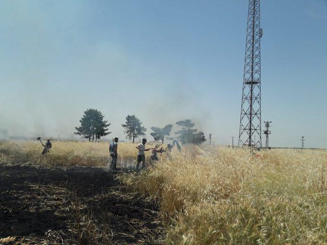 Mayınlı alanda çıkan yangın, buğday tarlasına sıçradı