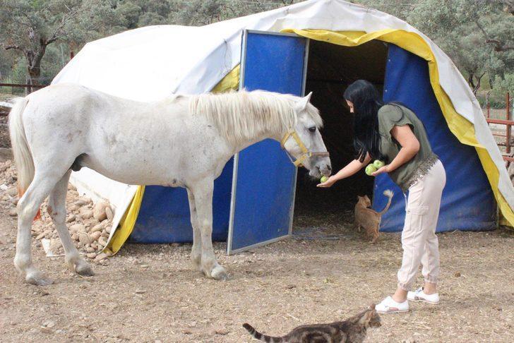Bıçaklanan Arap atı 'Mister' sağlığına kavuştu