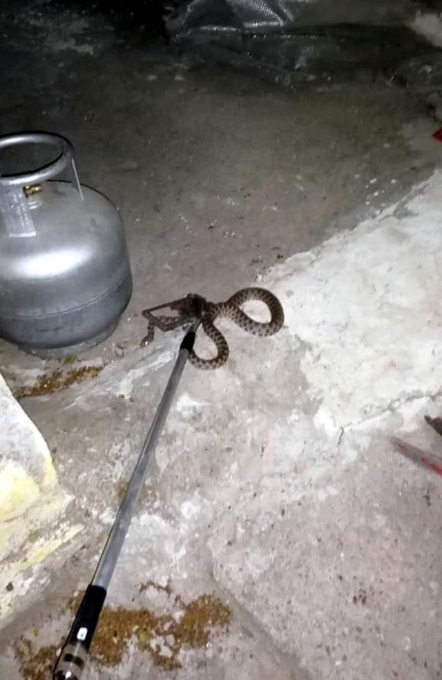 Kayseri itfaiyesinden yılan avı