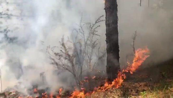 Safranbolu'da yıldırım düşmesi sonucu ormanda yangın çıktı