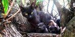 O kedi yavrularını korumak isterken öldü
