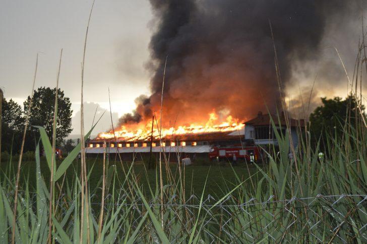 Kütahya'da, yıldırım düşmesi sonucu yangın çıkan çiftlikteki 500 yavru hindi yandı