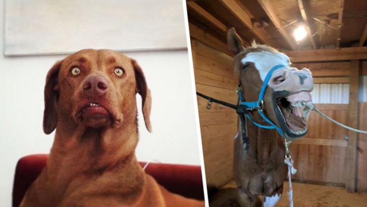 Gülmekten kendinizi alamayacağınız en komik hayvan fotoğrafları