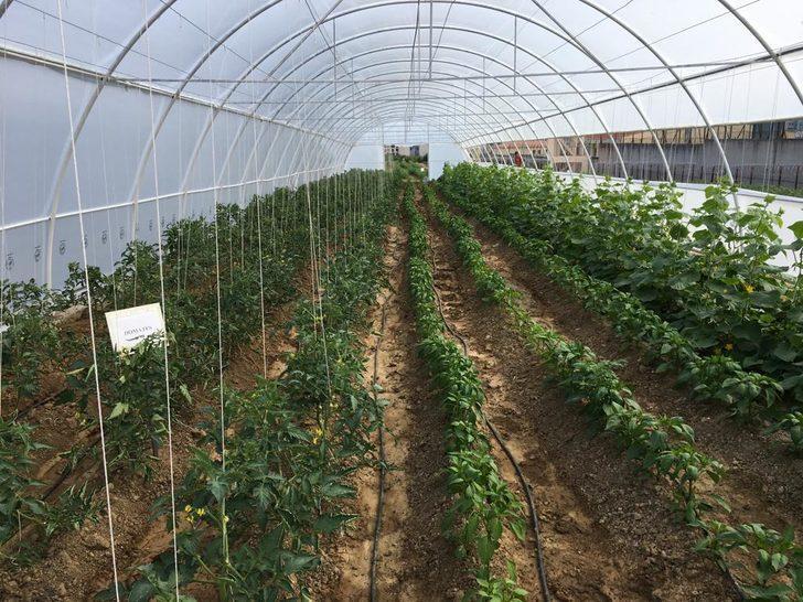 Bursa E Tipi Cezaevi'nde tarımsal üretim başladı