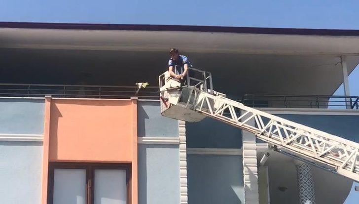 Papağan 'Ciguli', komşunun balkonuna kaçtı