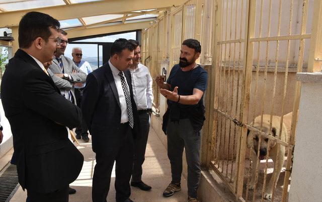 Kangal Köpeği Merkezi'nin standartları yükseltilecek