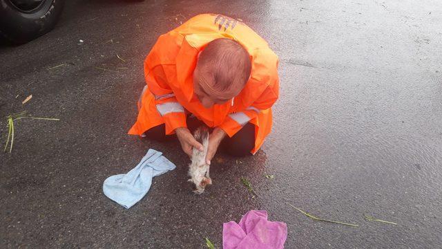 Sel sularına kapılan yavru kedi, belediye işçisinin suni teneffüsüyle hayata döndü