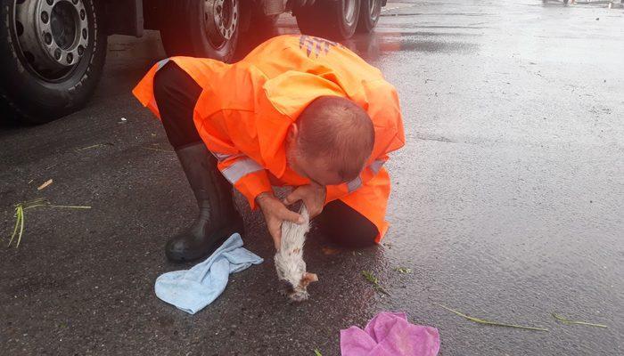 Yavru kedi, belediye işçisinin suni teneffüsüyle hayata döndü