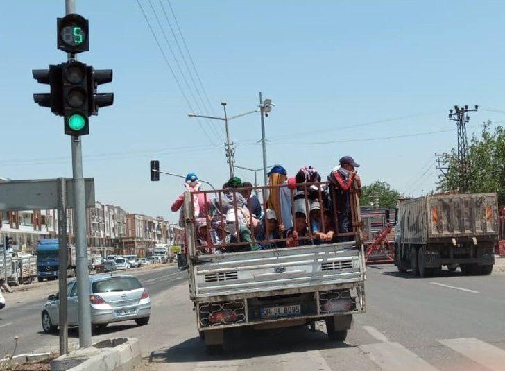 Diyarbakır'da tarım işçilerinin kamyonette tehlikeli yolculuğu