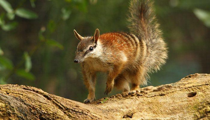 N ile hayvan ismi kaç tane sayabilirsiniz? İşte N harfi ile başlayan hayvan isimleri