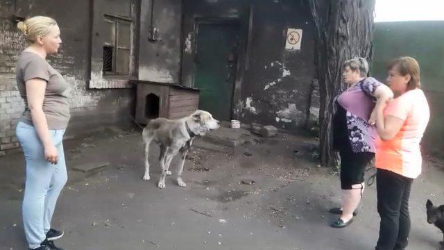 2 yıldır kayıp olan köpek, ailesine kavuştu