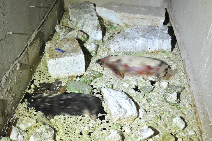 İnşaat halindeki binada 2 köpek ölüsü bulundu