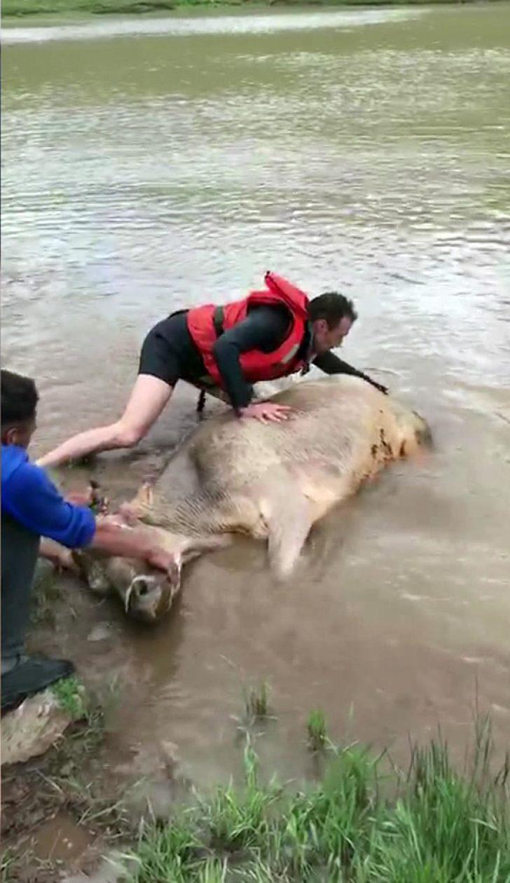 Gölette mahsur kalan inek, 3 saat sonra kurtarıldı