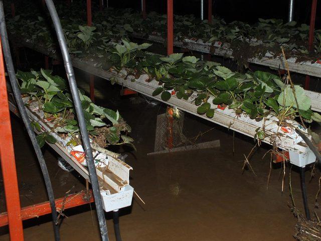 Yozgat'ta sağanak nedeniyle dereler taştı, seralar su altında kaldı