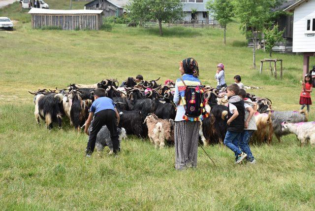 Hayvanlarını süsleyip, geleneksel kıyafetlerle yaylaya çıktılar