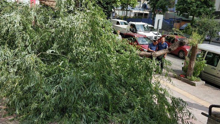 Kırılan ağaç yolu kapattı