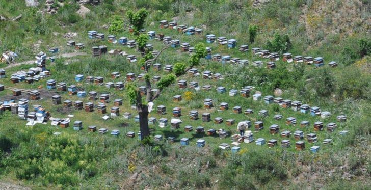 Arıcılar Kars'a gelmeye başladı