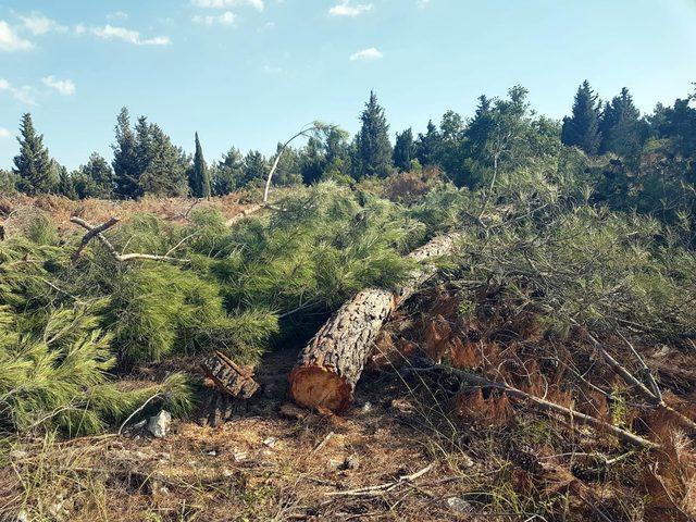 Mahallede ağaç kesimine tepki